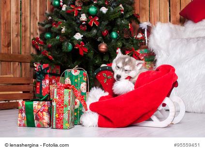 Jingle Belles!